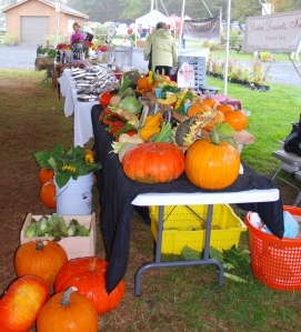 Pumpkins, gourds, and veggies, oh my! Photo by Kate Langenburg.
