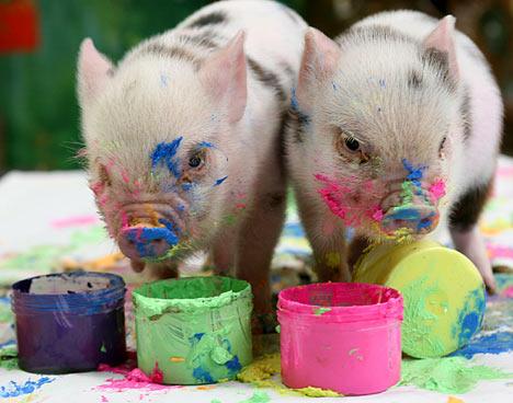 Pocket pigs of pennywell farm you voltagebd Choice Image